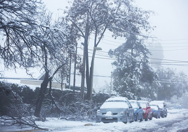 Many trees could not withstand the weight of the snow.- Image: EPA